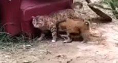هجوم كلاب على قطه