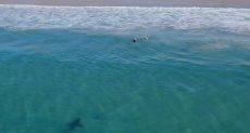 سمكة القرش تتجه نحو الطفلين