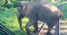 فيل يوقف قطار