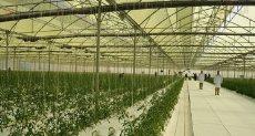 صوب زراعية - ارشيفية