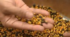 الحبوب الأسترالية