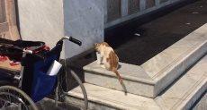 قطة تشرب ماء زمزم