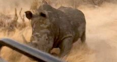 وحيد قرن