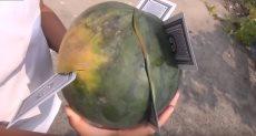 قطع الفاكهة بأوراق اللعبة الكوتشينة