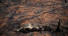 حرائق الغابات فى بوليفيا
