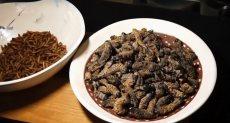 مطعم حشرات