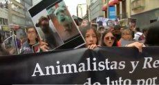 احتجاجات في كولومبيا للمطالبة بحماية الحيوانات الأليفة