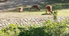 جانب من حديقة حيوان برلين