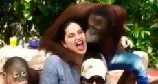 القرد سيزر أثناء تحرشه بالسيدة