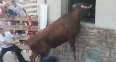 مواطن يجر الثور من ذيله