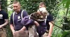 رجال الإنقاذ ينتشلون الكلب