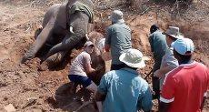 جانب من عملية إنقاذ الفيل