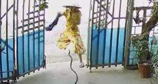 الثعبان يهاجم الفتاة