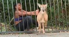 انقاذ غزال