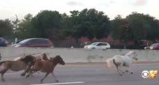سباق خيول على طريق سريع