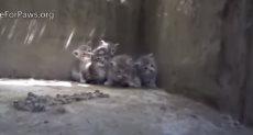 عملية إنقاذ قطط