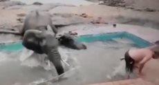 فيل يهاجم شابين