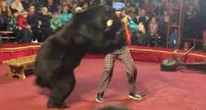 لحظة هجوم الدب على مدربه