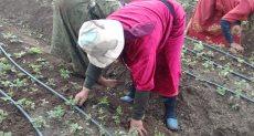 زراعة الفراولة