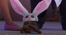 سلحفاة بزى أرنب