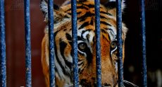 حدائق حيوان الجيزة