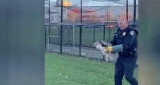 شرطى ينقذ صقرا كبيرا عالقا فى شباك ملعب مارلبورو بأمريكا