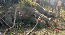 """نفوق الفيل """"بن لادن"""" داخل محمية بالهند"""