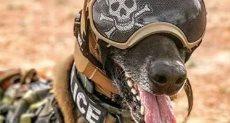 غطاء رأس يحمى الكلاب من فقدان السمع