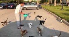 الفنان مدحت صالح يطعم القطط