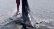 انقاذ سمكة قرش