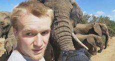 الفيلة تتجمع حول المصور