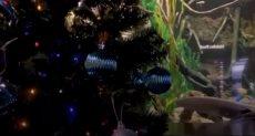 السمكة تضيء شجرة عيد الميلاد