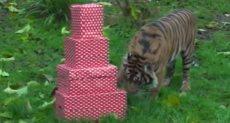 الحيوانات وهدايا أعياد الميلاد
