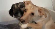 صداقة الكلاب