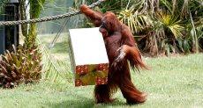 الهدية مع القرد