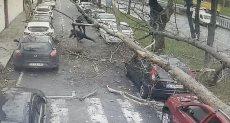 سقوط شجرة عملاقة على 3 مواطنين وسيارة فى تركيا
