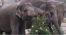 احتفال حديقة الحيوان فى برلين بعيد الميلاد