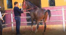 تدريب الخيول