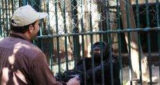 حديقة حيوان الجيزة