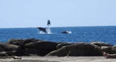 دلافين تلهو على شواطئ الجزائر