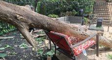 الشجرة تسقط على الكرسى