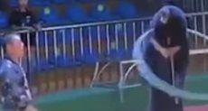 الدب خلال العرض