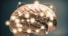 دماغ - صورة أرشيفية