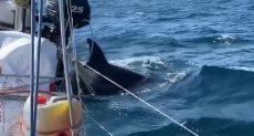 هجمات الحيتان القاتلة