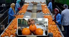 صادرات البرتقال