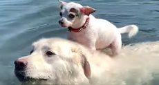 كلب يركب فوق ظهر أخر