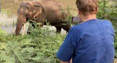 تايلند تتيح اجتماع افتراضى مع فيلة عملاقة