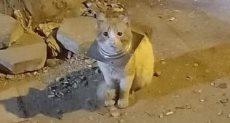 القط قبل إنقاذه