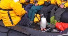 البطريق بداخل القارب