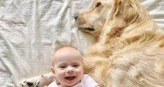 الكلب والطفلة